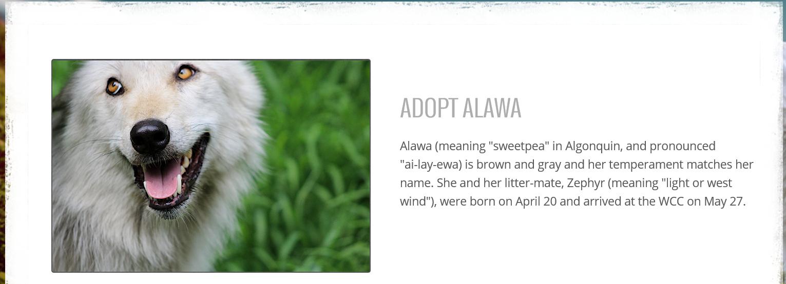 Alawa-adoption